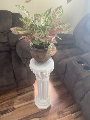 Beautiful INDOOR REAL PLANT & stand for Sale in St. Louis, MO