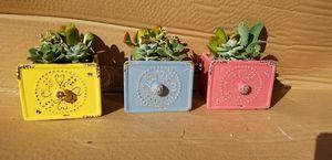 Antique style ceramic drawer succulent garden for Sale in Vista, CA
