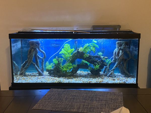 75 gallon tank only for sale only 3 weeks old