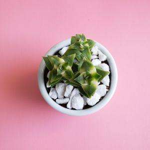 Rare Succulents for Sale in Escondido, CA