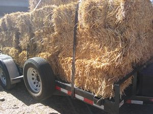 Hay forage mix-- barley oats and wheat for Sale in Phelan, CA