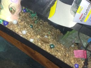 2 Fish Tanks One Small and On Large!! Both Good condition and Working!! for Sale in Orlando, FL