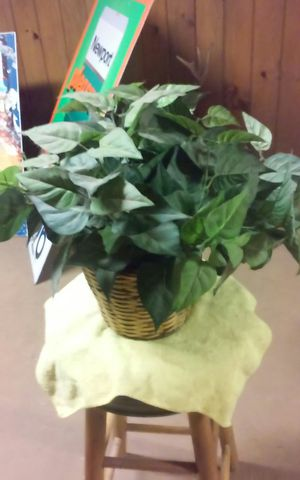 Fake plant in wooden basket for Sale in Dudley, MA