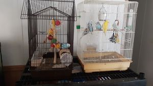 Parakeets for Sale in Jefferson, TX
