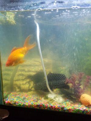 8 pescaditos anaranjados y dos negritos el total son 10 for Sale in Adelphi, MD