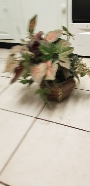 Potted plant for Sale in Phoenix, AZ