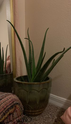 Aloe Vera house plant, bohemian styled pot for Sale in Winter Park, FL