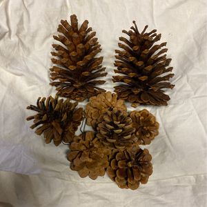 Pine Cones for Sale in Buffalo, NY