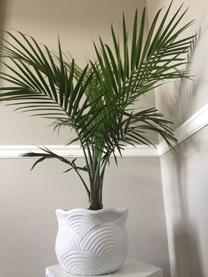 Plant for Sale in Clackamas, OR