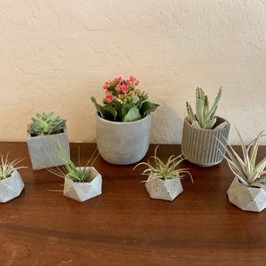 Concrete Planters for Sale in Gilbert, AZ