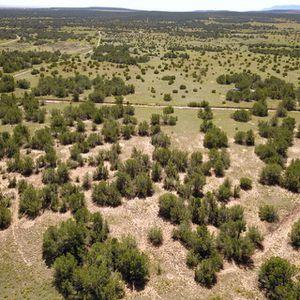 8 acres near the Manzanos for sale! for Sale in Estancia, NM