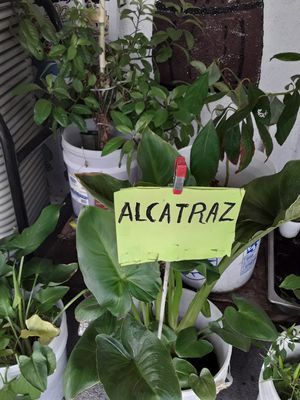 Plantas for Sale in Los Angeles, CA