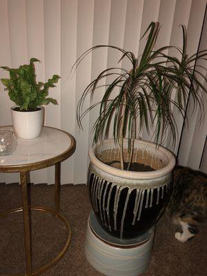 House Plant/Tree with Ceramic Pot for Sale in Cranston, RI