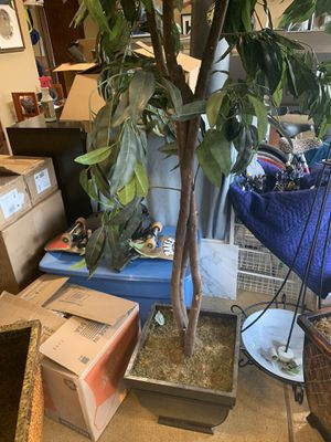 Fake Tall Plants/Trees with Black Pot/Vase-We have 3 of them for Sale in Newport Beach, CA