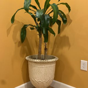 Planter with Plant for Sale in Burtonsville, MD