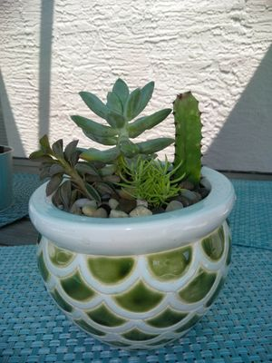 1 cactus and 3 succulents for Sale in Ocoee, FL