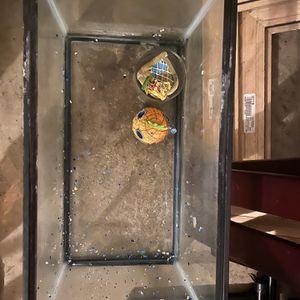 Medium Fish Tank Spongebob Theme With Pump for Sale in Dallas, TX