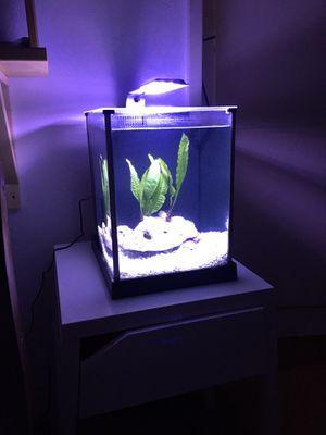 Fluval spec 2.6 gal aquarium/fish tank for Sale in Daly City, CA