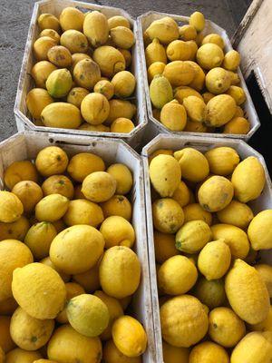 Lemons for Sale in Orange Cove, CA