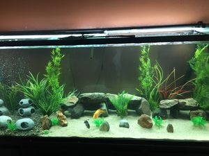 300 gallon aquarium for Sale in San Jose, CA
