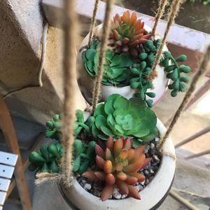 Fake Succulent Plants for Sale in Montebello, CA