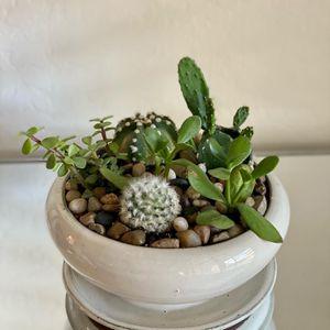 Succulent & Cactus Terrariums for Sale in Gilbert, AZ