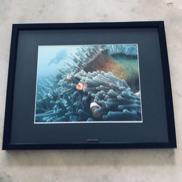 """Fish Picture Black Mat and Frame 71"""" x 21"""" x 1"""""""