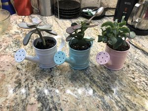Watering can succulent planters for Sale in Lexington, KY