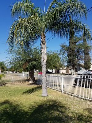 Free palm tree for Sale in Ontario, CA