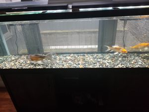 125 ft fully set up aquarium for Sale in Baltimore, MD