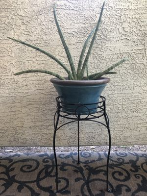 Live Succulent in Turquoise Blue Ceramic Planter for Sale in Phoenix, AZ