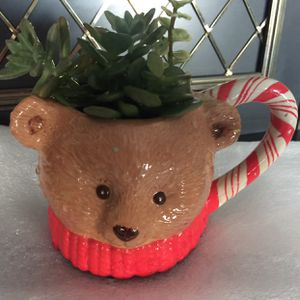 Christmas Teddy Bear Succulent Plant Ceramic Cup 🎄🤶🏽 for Sale in Bakersfield, CA