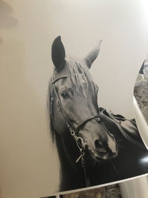 New never used set of 11x14 hard paper prints black and white animals for Sale in Gilbert, AZ