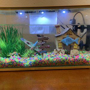 3 Gallon Fish Tank For Beta + Accessories for Sale in Portland, OR