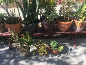 Lot of 9 succulent and cactus 🌵 plants and bench for Sale in Los Angeles, CA