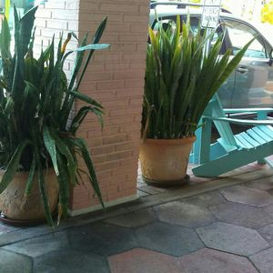 Free Plants Must Take Both for Sale in St. Petersburg, FL