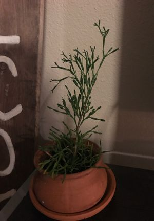 plant for Sale in San Marcos, TX