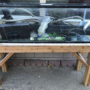 2 Fish Tank for Sale in Baldwin Park, CA