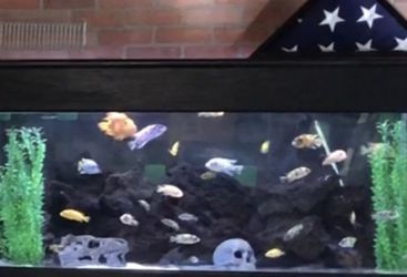 Fish tank And Stand . 150 Gallon. for Sale in Temecula,  CA