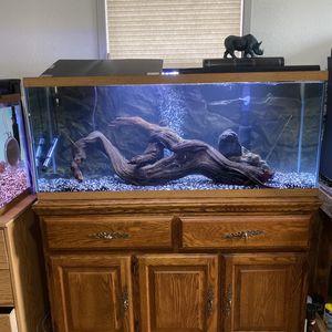 Fish Tank Driftwood for Sale in Everett, WA