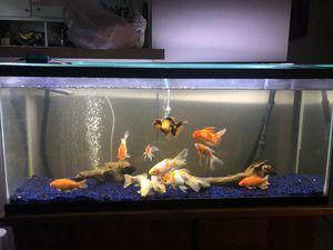 Aquarium fish tank 55 gallons for Sale in Los Angeles, CA