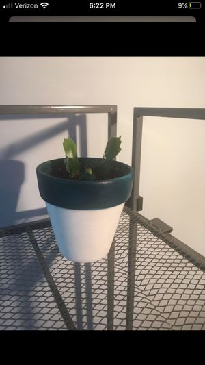 Christmas cactus (house plant) for Sale in Arlington, VA