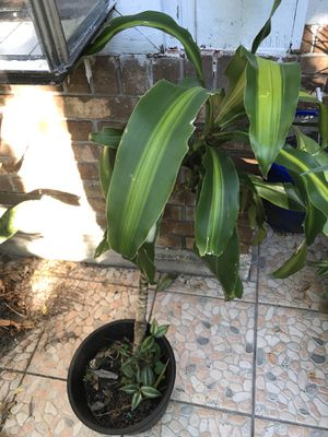 Plant for Sale in Palm Harbor, FL