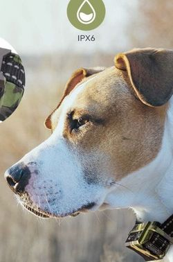Bark Collar Rechargeable for Sale in Queens,  NY