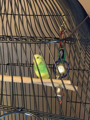 Parakeet w/ Cage and Food for Sale in Stanwood, WA