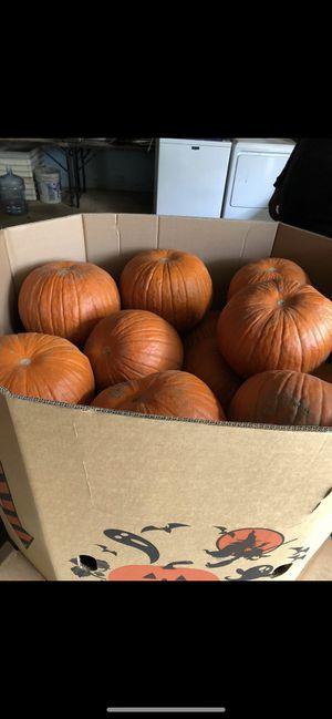 Pumkin pallet 25 count in one pallet for Sale in Hightstown, NJ