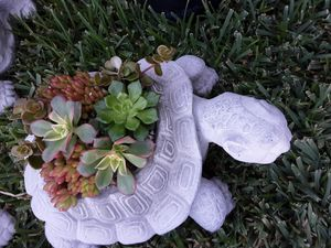 "14"" cement turtle planters with succulent plants $14 each for Sale in Whittier, CA"