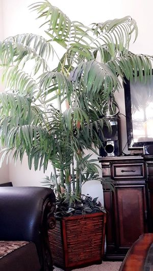 Beautiful fake plant for Sale in Denver, CO