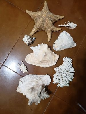 Set of Conch shells, starfish, coral. for Sale in Troup, TX