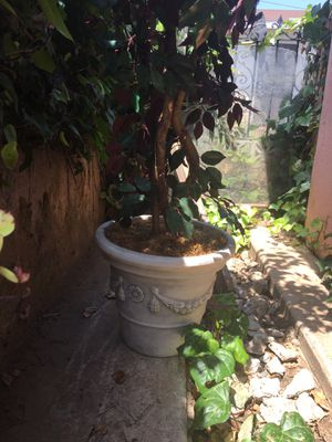 Fake house plant for Sale in Monterey Park, CA